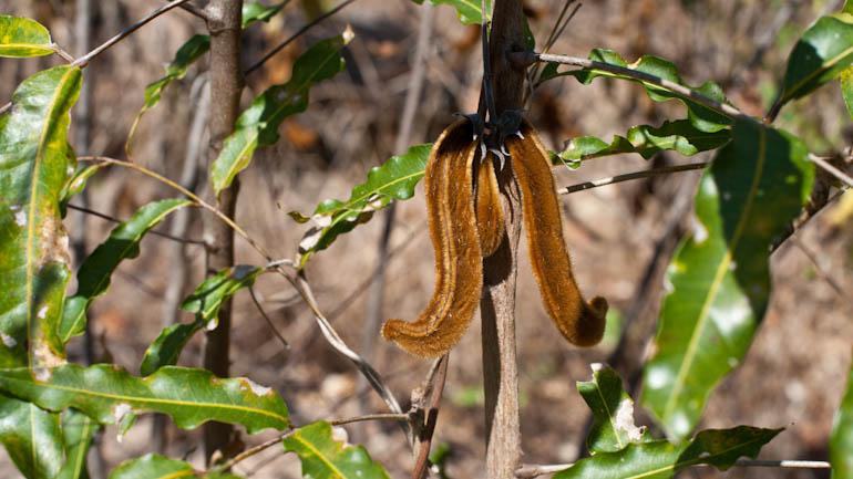 Qui s y frotte s y pique naturevolution for Plante urticante