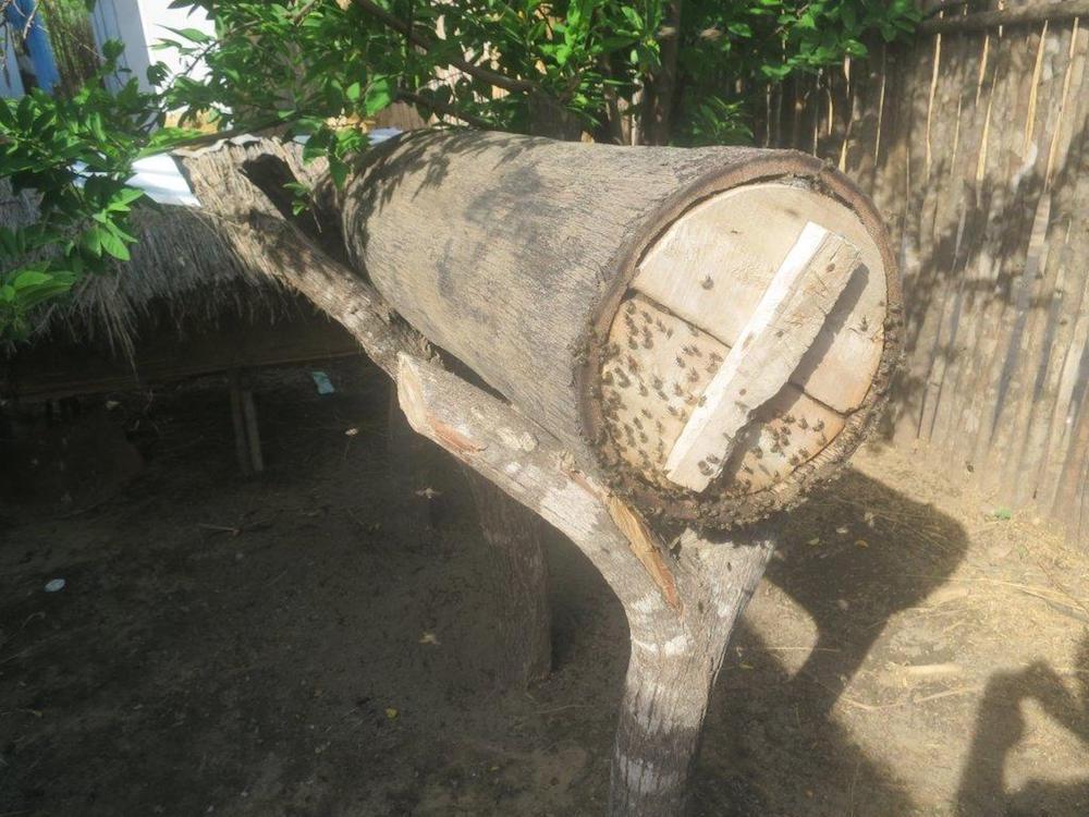 L'apiculture à Madagascar | Naturevolution